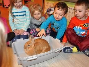 Poznajemy zwierzątka – królik